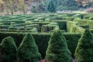 The VanDusen Garden's Elizabethan Hedge Maze, Vancouver, British Columbia