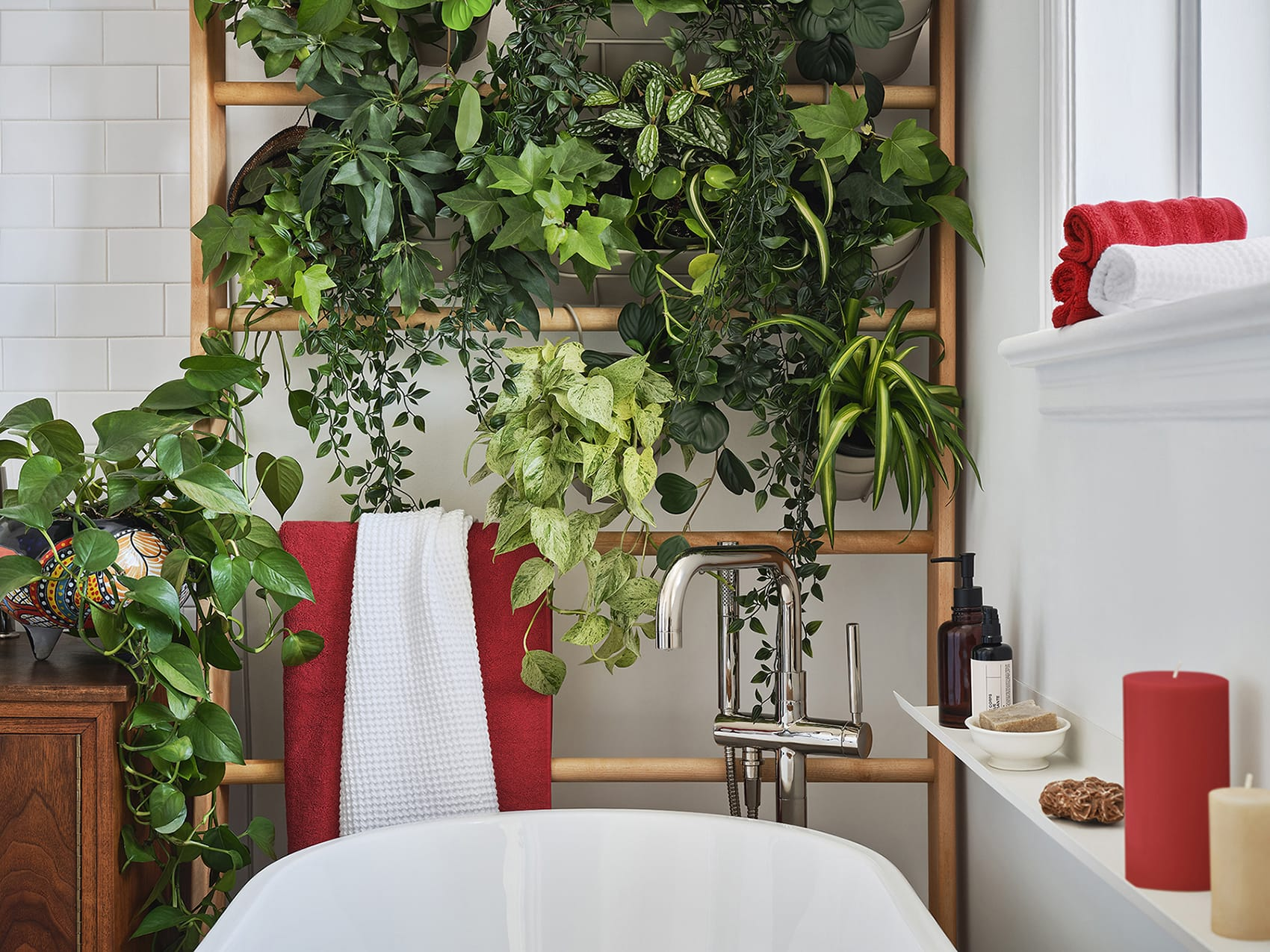 Jardin vertical plantes de salle de bain